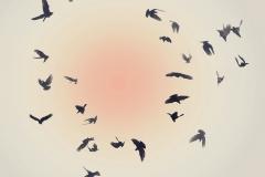 BirdsCompositefFromSingleSHot_POLAR_1600