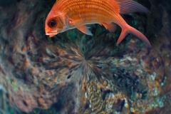 RedFish_NewYorkAquarium_POLAR_1600