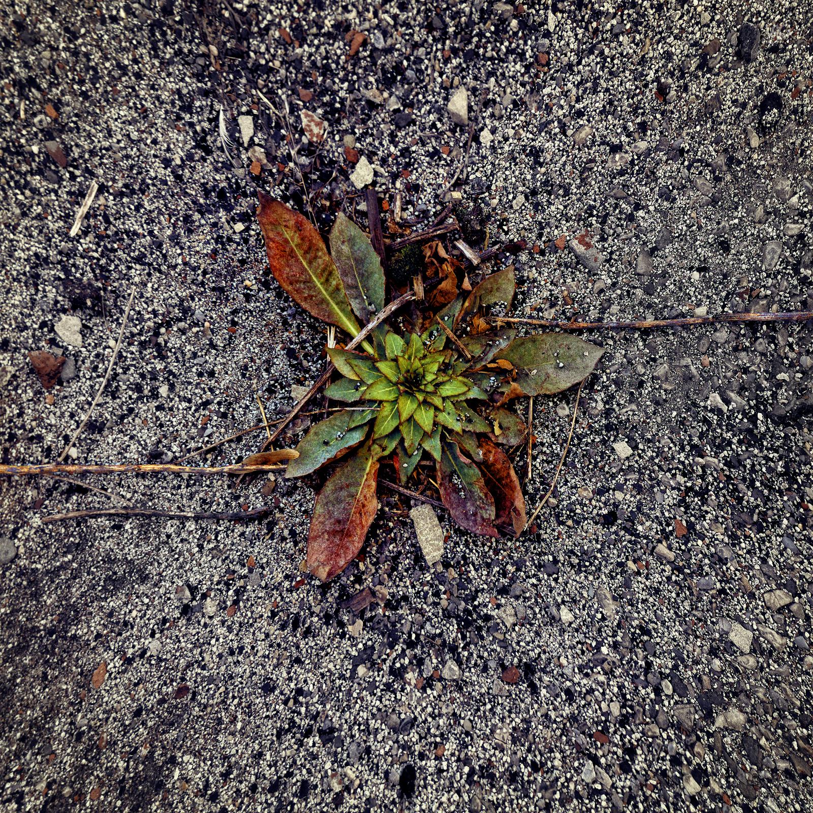 GrassThroughStoneThreeSlideRedHook_warped_1600