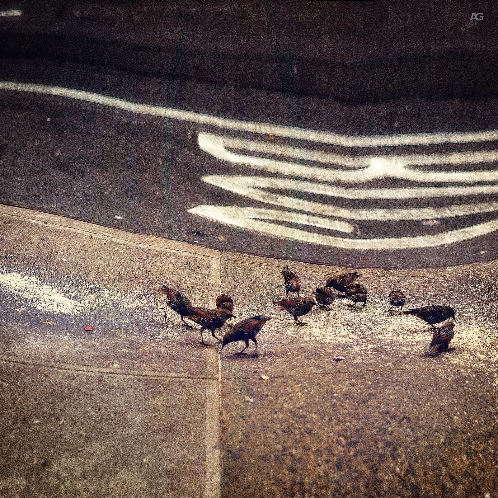 BirdsFeedingOnASidewalkOfManhattan_warped_1600