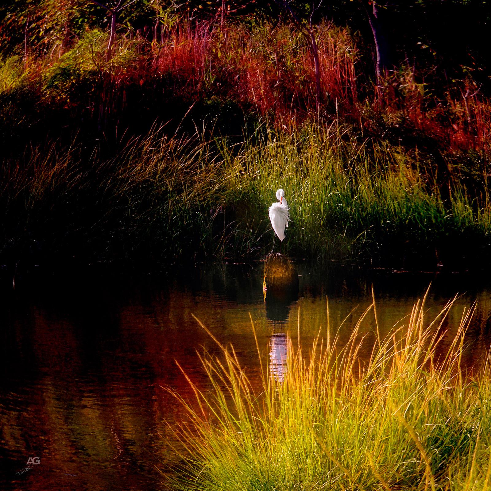 Heron-inAnElegantPose_SingleShot_MG_0673_1600
