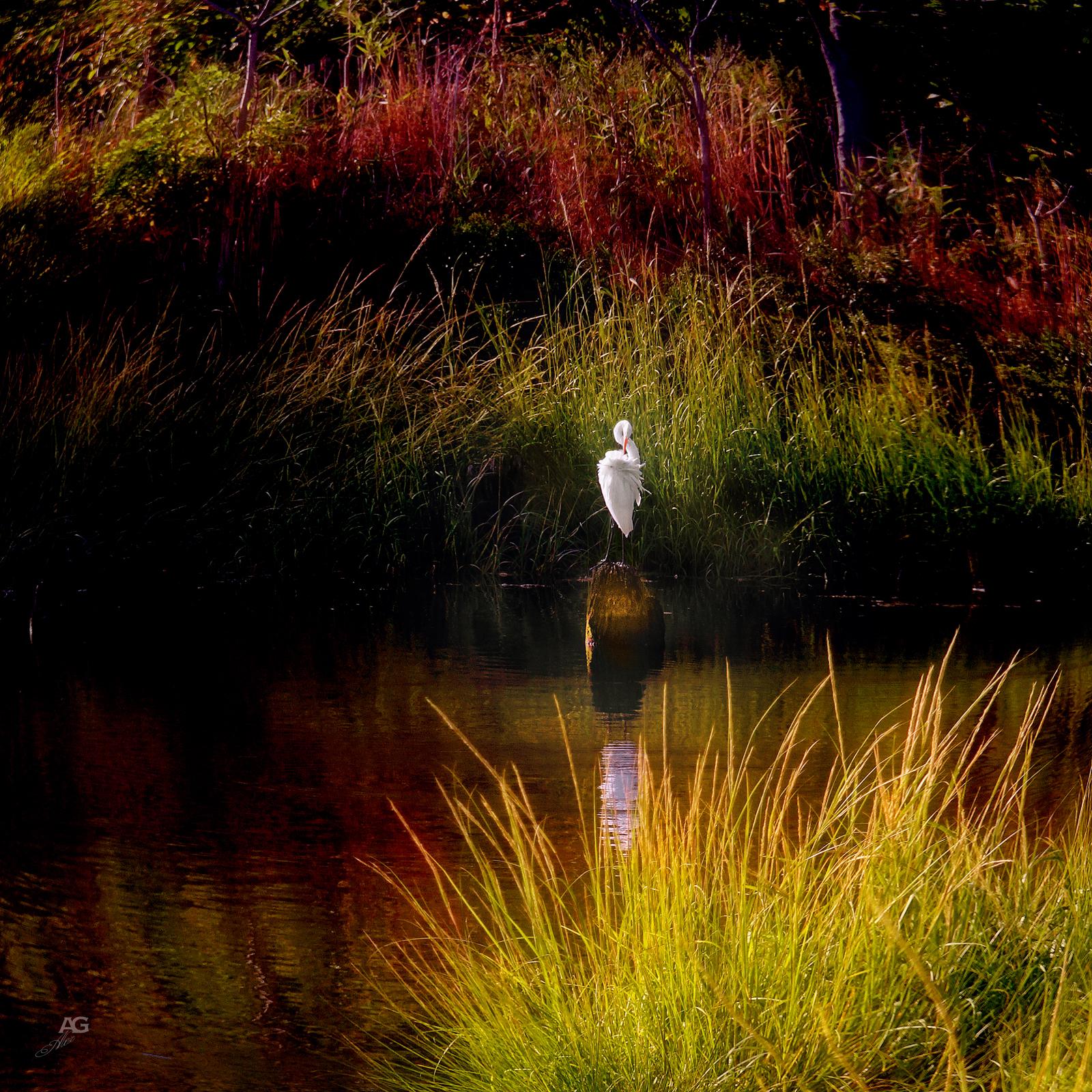 Heron inAnElegantPose_SingleShot_MG_0673_1600