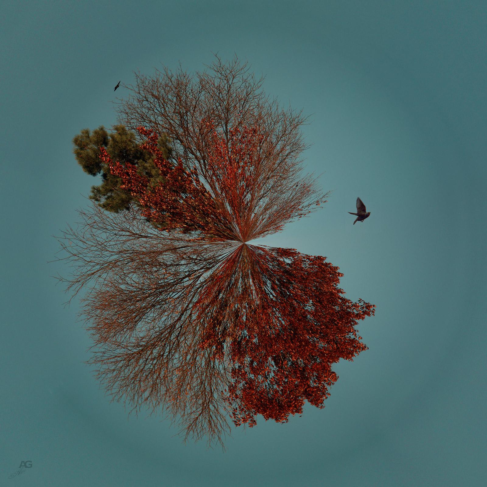 OnlyTopsOfTheTrees_StatenIsland_POLAR_1600