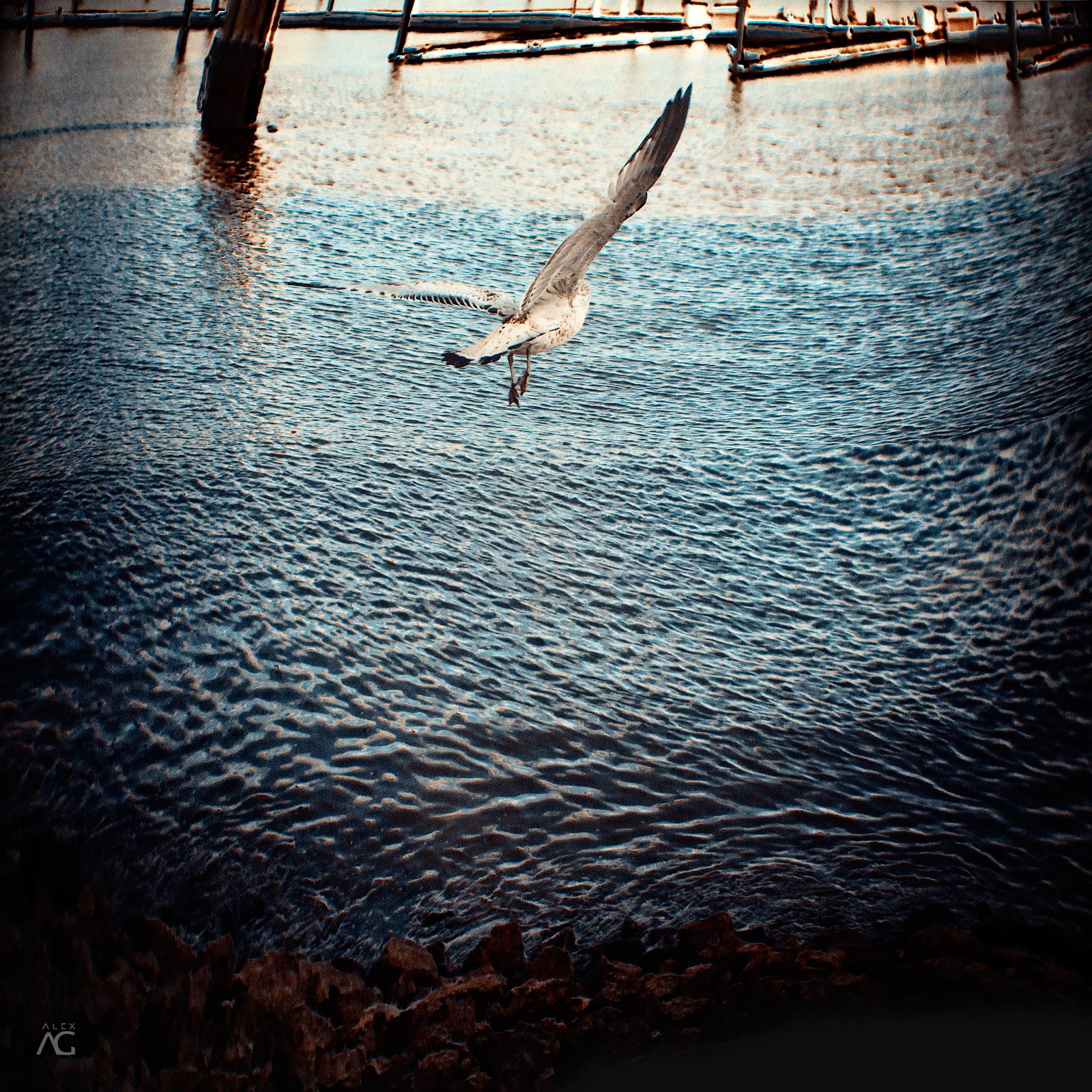 SeagullFlyingOverHudsonSingleShot_Romanika_MG_5120_1600