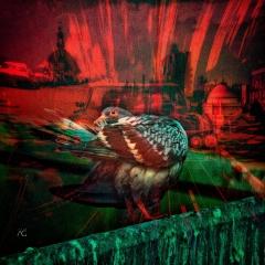 PigeonCloseupBentSingleShot_MG_3047_cannelsMixed_Daydream of a Pigeon