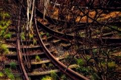 SubwayTrucksAndBirchesOnHihlane_warp_1600