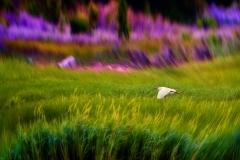 HeronFlyingSingleShot_1600