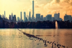 LotsOfSeagulsOnCentralParkReservour_warped_1600