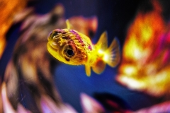 SingleShotExoticYellowFish_warped_1600