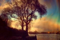 TreeOnTheEastRiverShoreWithTriboroBrodeAndHellsgateBridgeBehindItFromManhattan_warped_1600